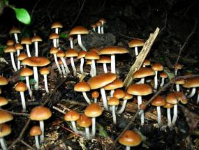 Psychedelic drugs as treatment for anxiety and addiction | Addiction Alternative Treatment